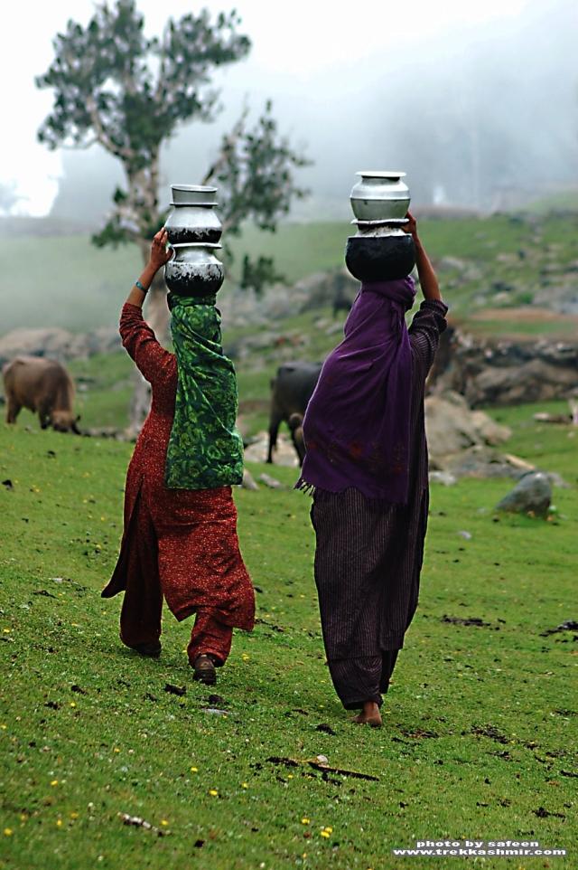 Nomads tribes of kashmir himalayas